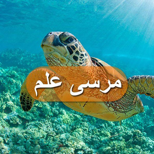مرسى-علم